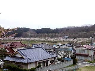 20150419夏井千本桜2(その18)
