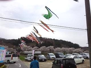 20150419夏井千本桜2(その23)
