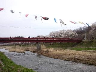 20150419夏井千本桜2(その24)