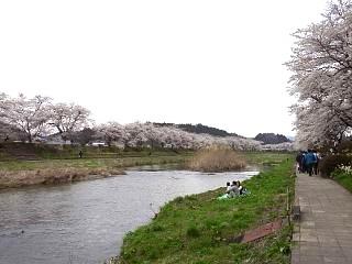 20150419夏井千本桜2(その25)