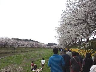 20150419夏井千本桜2(その26)