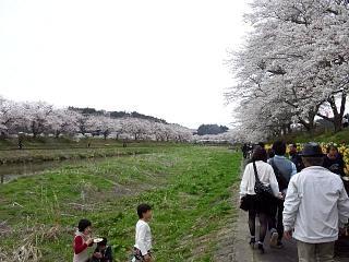 20150419夏井千本桜2(その27)