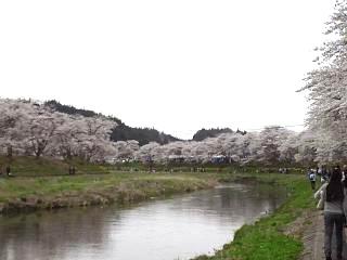 20150419夏井千本桜2(その30)