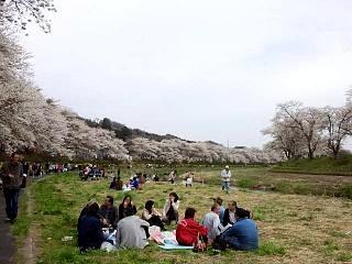 20150419夏井千本桜2(その33)