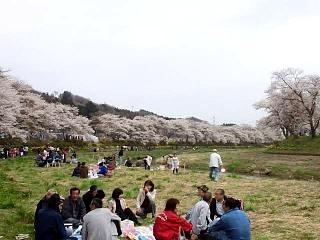 20150419夏井千本桜2(その34)