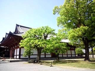 20150502東寺(その18)