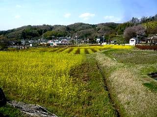 20150418花見山(その35)