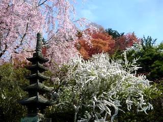 20150418花見山(その40)