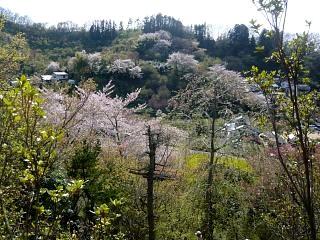 20150418花見山(その42)