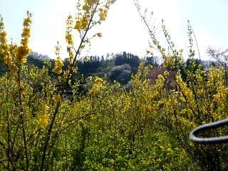 20150418花見山(その44)