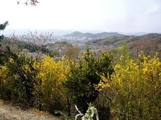 20150418花見山(その49)