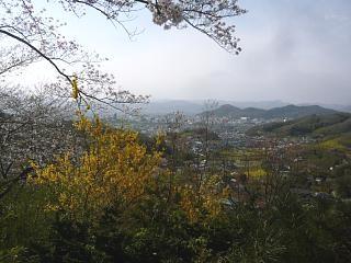 20150418花見山(その50)