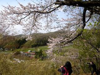 20150418花見山(その59)