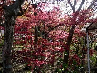 20150418花見山(その65)