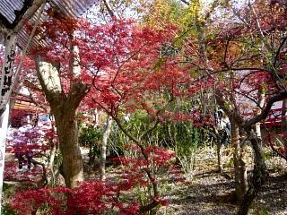 20150418花見山(その67)