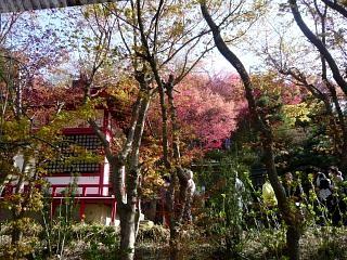 20150418花見山(その69)