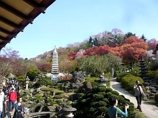 20150418花見山(その72)