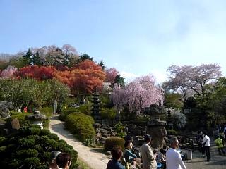 20150418花見山(その73)