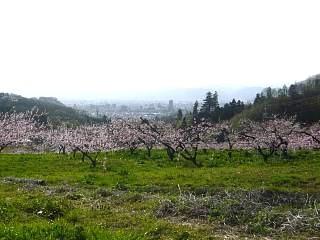 20150418花見山(その79)