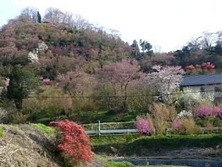 20150418花見山(その87)