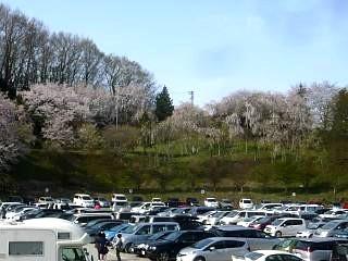20150419三春滝桜(その4)