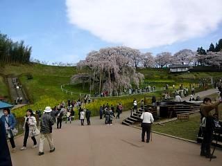 20150419三春滝桜(その5)