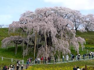 20150419三春滝桜(その6)