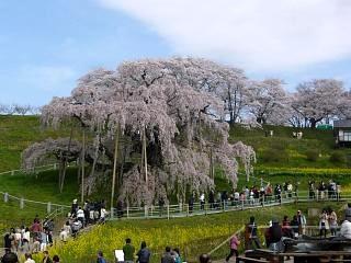 20150419三春滝桜(その8)