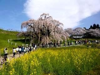 20150419三春滝桜(その9)