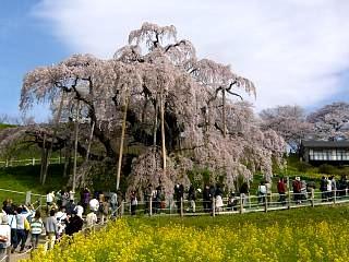20150419三春滝桜(その10)
