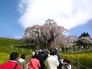 20150419三春滝桜(その11)