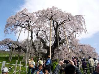 20150419三春滝桜(その14)