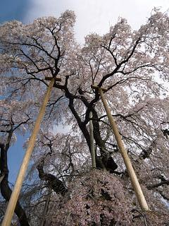 20150419三春滝桜(その15)