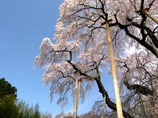 20150419三春滝桜(その17)