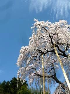 20150419三春滝桜(その23)