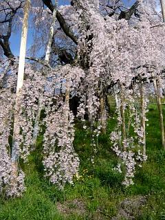 20150419三春滝桜(その24)