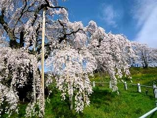 20150419三春滝桜(その26)