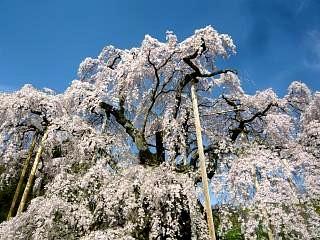 20150419三春滝桜(その27)