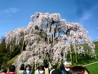 20150419三春滝桜(その28)