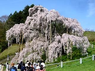 20150419三春滝桜(その30)