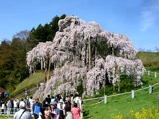 20150419三春滝桜(その31)