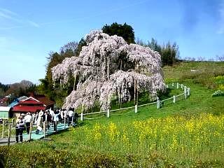 20150419三春滝桜(その32)