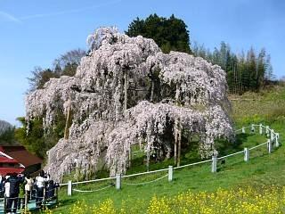 20150419三春滝桜(その33)