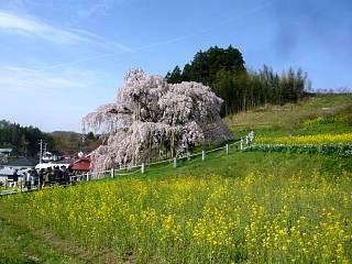 20150419三春滝桜(その34)