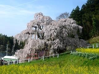 20150419三春滝桜(その36)
