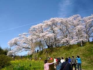 20150419三春滝桜(その39)