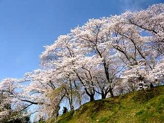 20150419三春滝桜(その40)