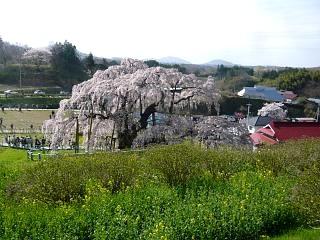 20150419三春滝桜(その41)