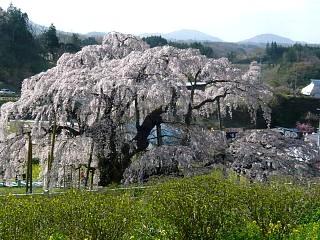 20150419三春滝桜(その42)