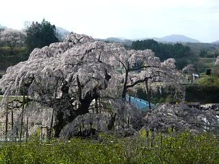 20150419三春滝桜(その46)